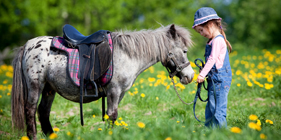 Poney D�couverte